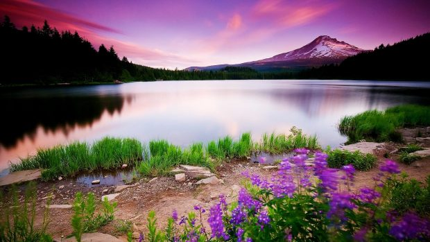 Colorful Nature HD Pictures.